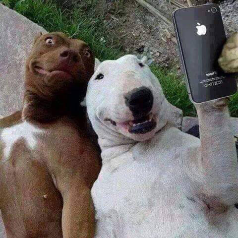 dogs selfie happy animals