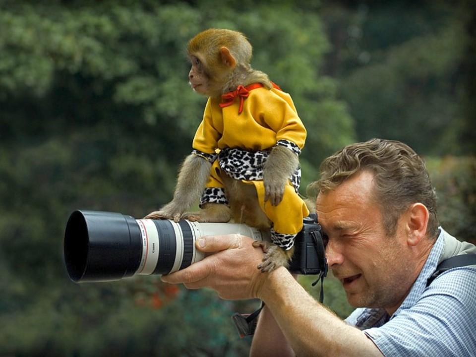 funny monkey on camera