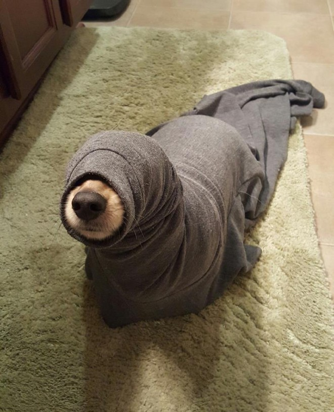funny dog picture seal
