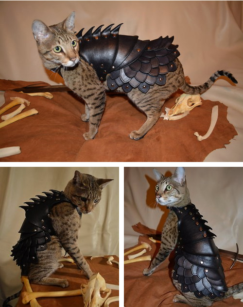 funny cat picture battle armor