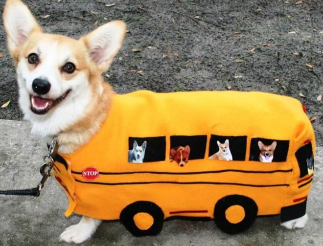 funny dog dress idea