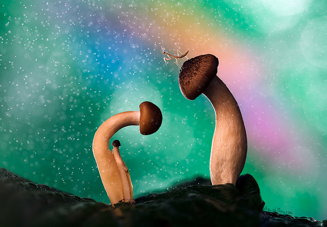 macro photography mushroom