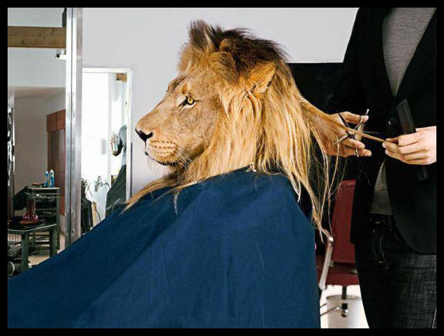 animal hair cut
