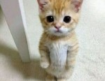 cat-standing-up