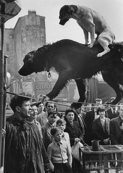 dog acrobats