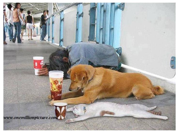 funny beggars