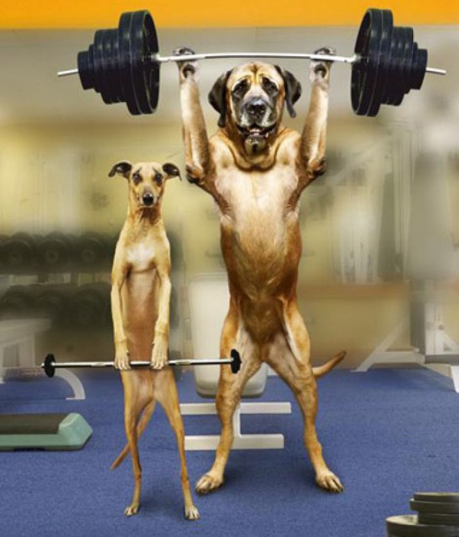 funny dogs exercise