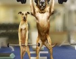 funny-dogs