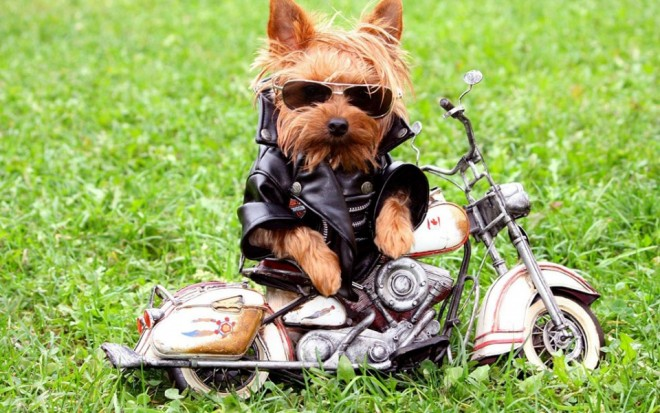 funny dog on bike