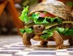 funny-turtle-burge