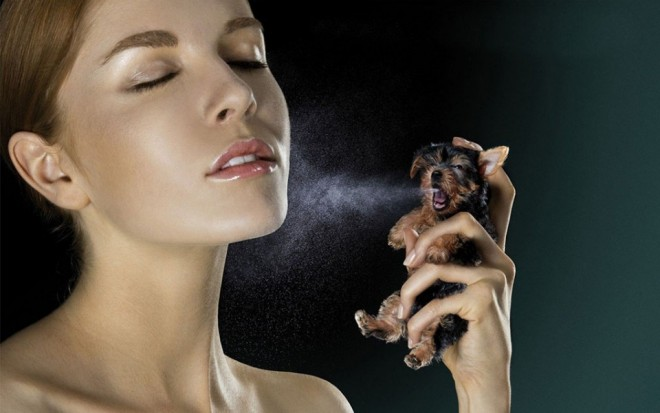 funny-people-dog-perfume