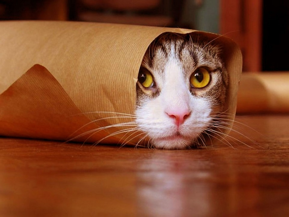 cat wrap funny cat picture