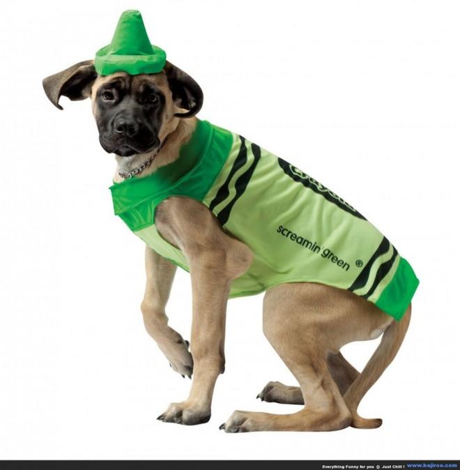 funny animal dog