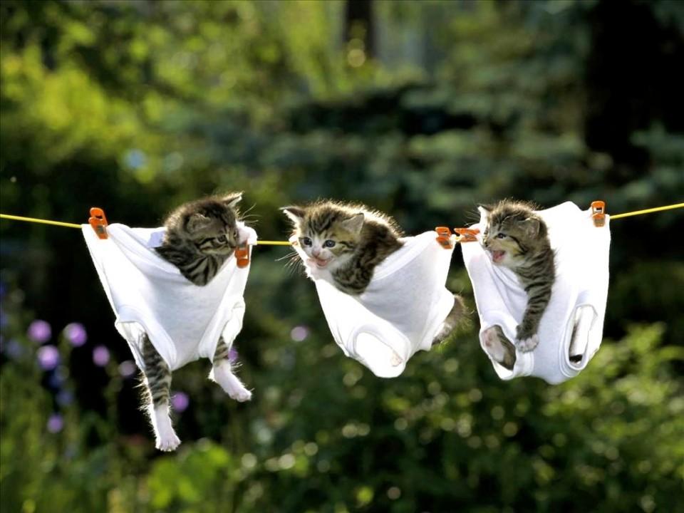 funny animal kitten hanging