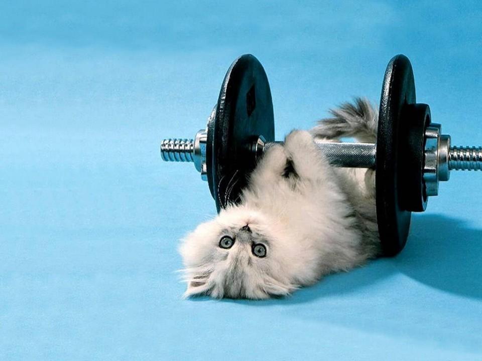 funny animal kitten