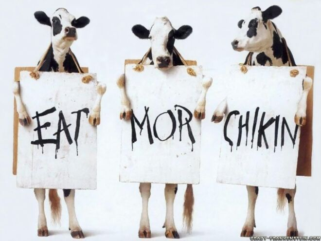 funny ads cow chicken