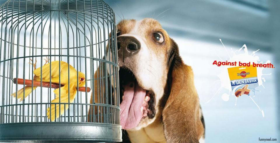 funny ads pedigree animal bird