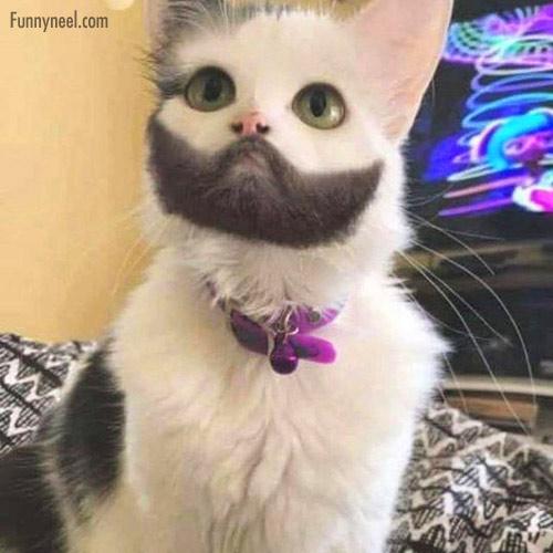 funny animals cat beard