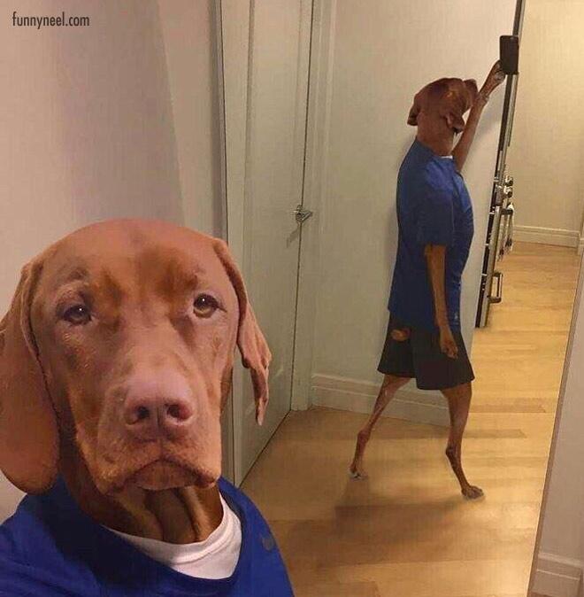 funny animals dog costume