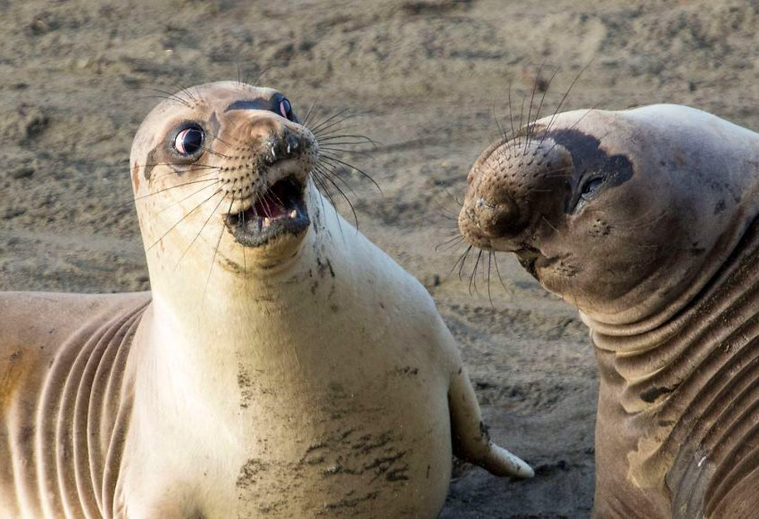funny animals seals expression
