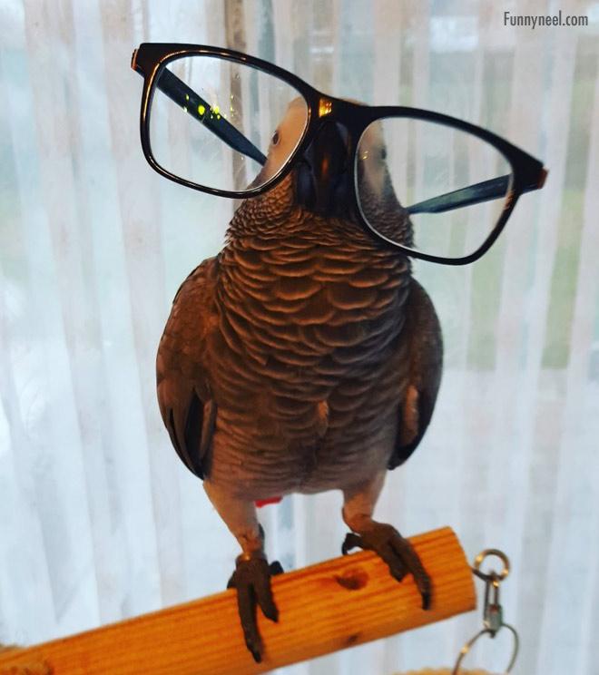 funny birds eye glass