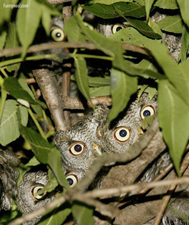 funny birds owl hidespot