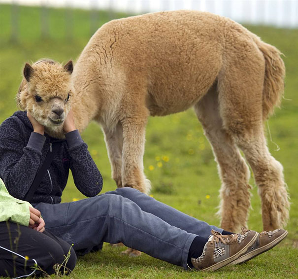 funny illusions animal woman perfect time photos