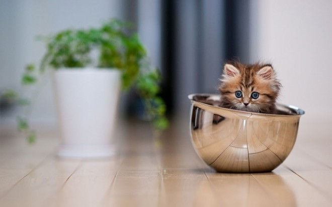 funny cat in a cup