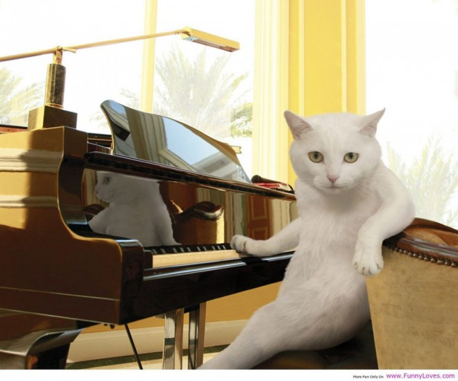 funny cat picture piano