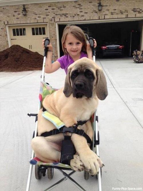 funny animal dog with child