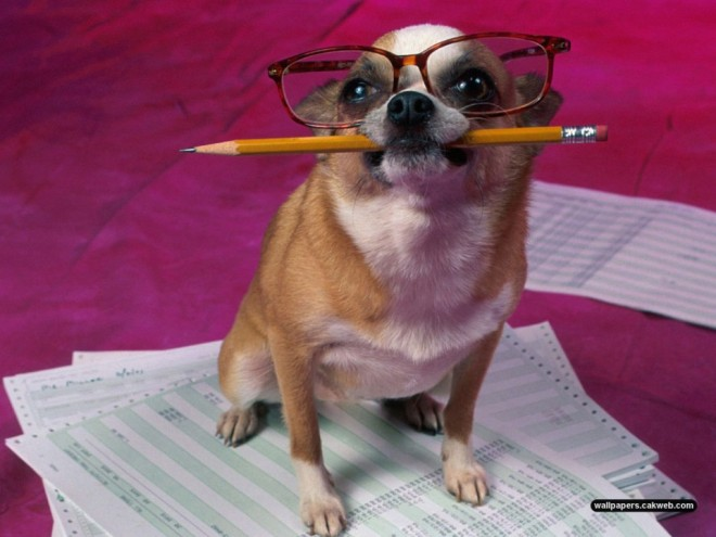 funny dog preparing for exam