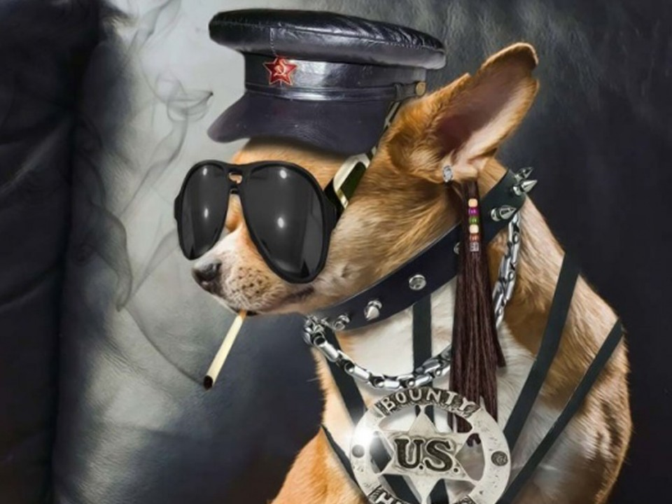 funny dog soldier