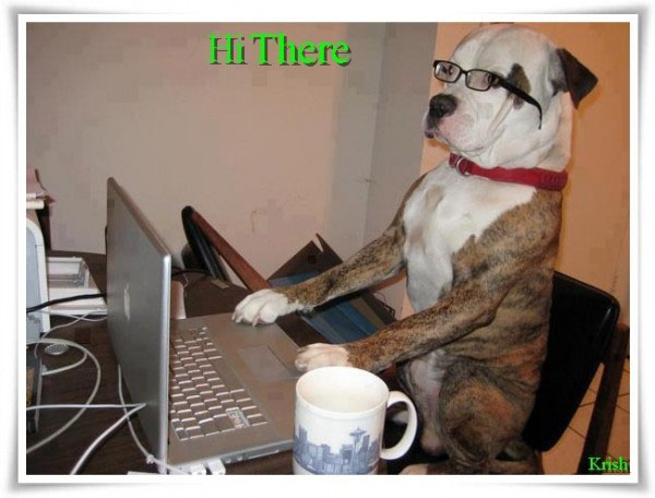funny dog using computer