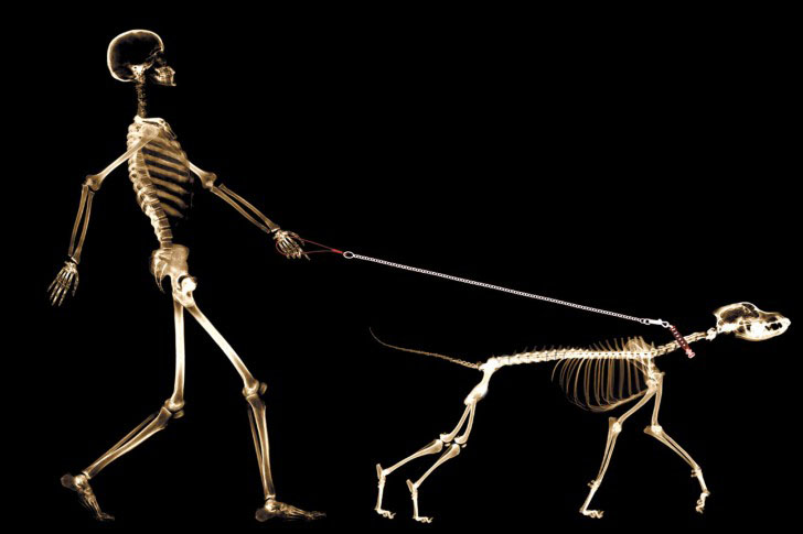 creative ads skeleton walking with his dog