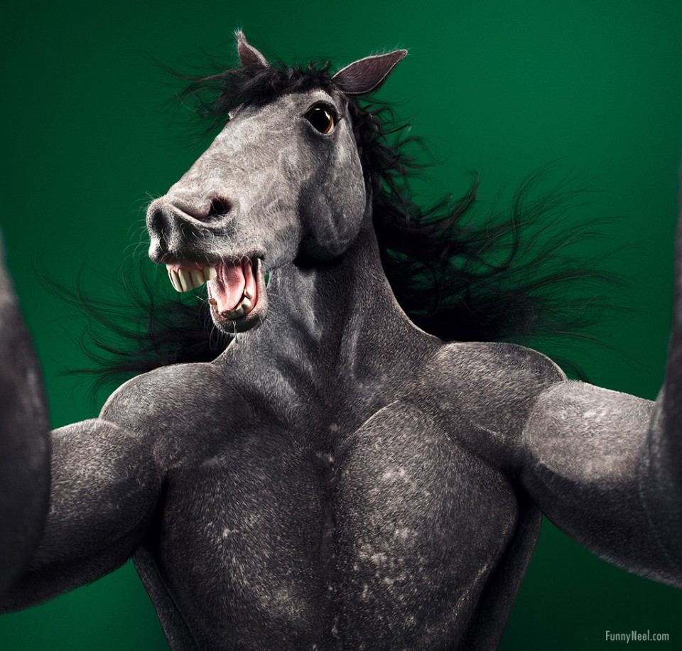 funny animals donkey selfie photo manipulation