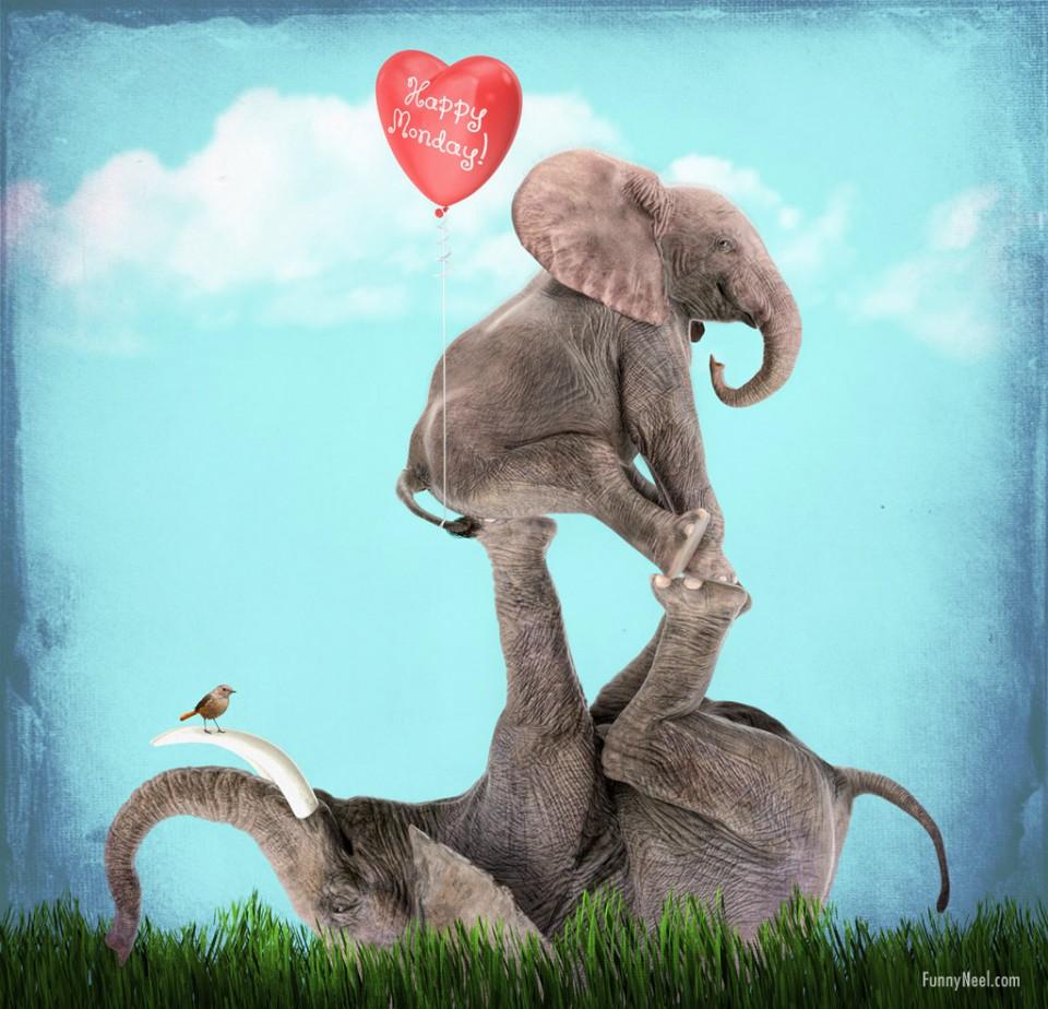 funny elephant animals happy