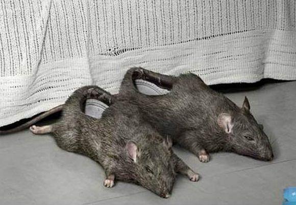 rat bathroom slippers weird pictures