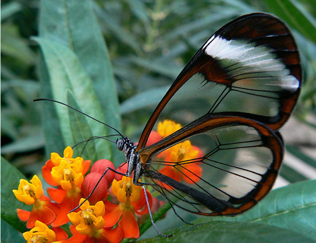 inspiring butterfly on flower
