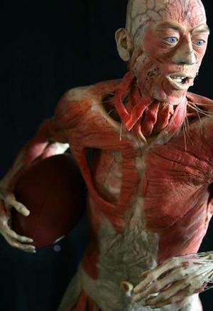 inspiring human body exhibition
