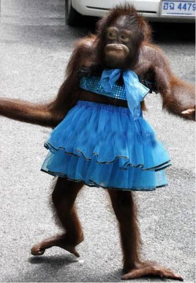 funny animals monkey dress