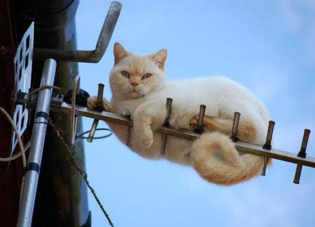 funny cat stuck on antenna