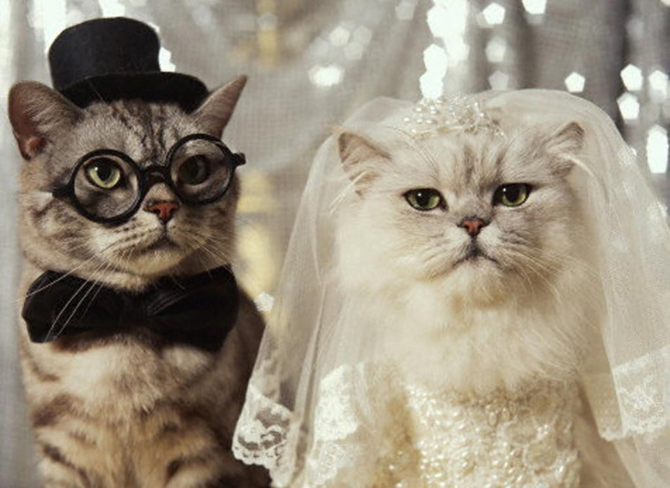 funny cats wedding