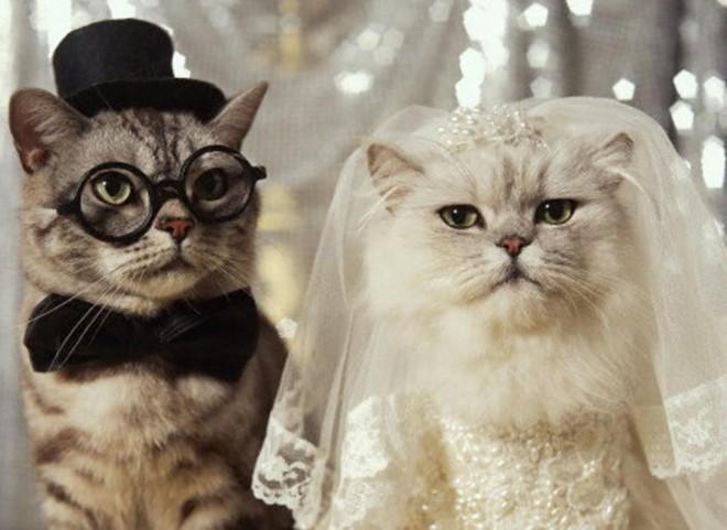 funny cats wedding