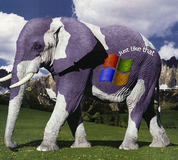 creative ad windows elephant