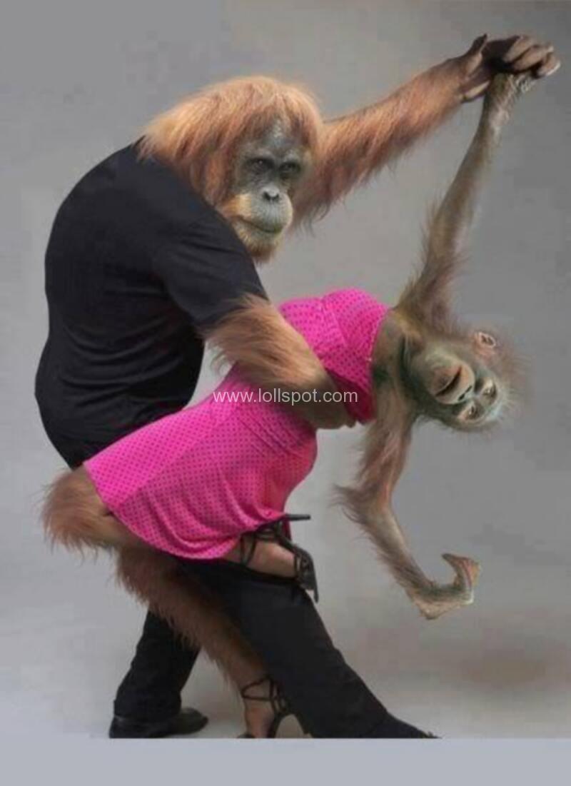 funny monkeys dancing