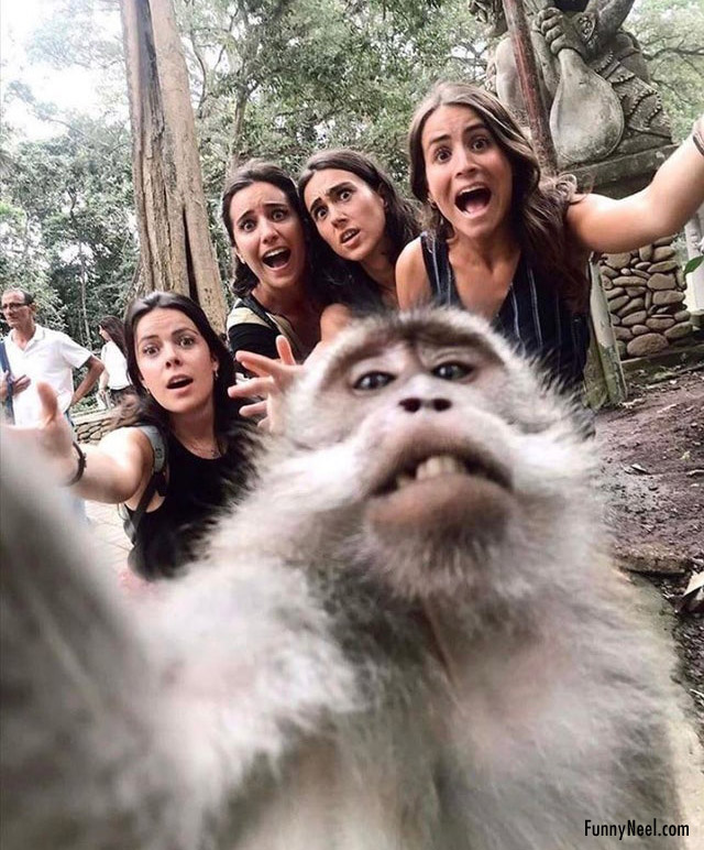 monkey selfie funny people animal