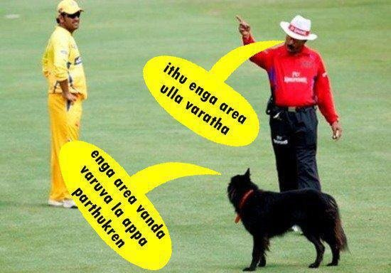 funny-cricket