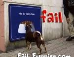 funny-dog-fail