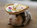 funny-mouse-with-hat