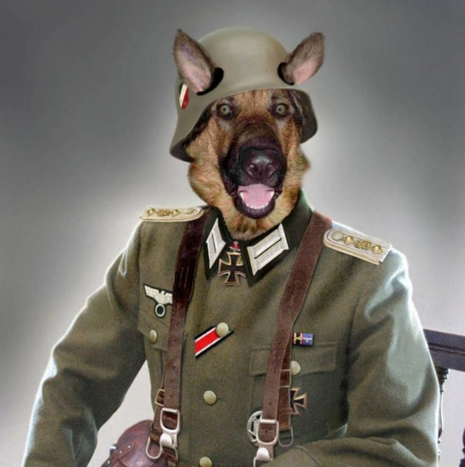 funny animals general dog